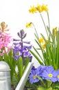 Bright spring flowers Royalty Free Stock Photos