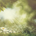 Bright summer afternoon in the forest. Royalty Free Stock Photo