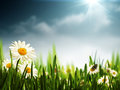 Bright summer afternoon natural backgrounds Royalty Free Stock Photo