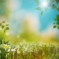 Bright summer afternoon natural backgrounds Royalty Free Stock Images