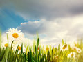 Bright summer afternoon natural backgrounds Royalty Free Stock Photography