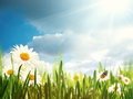 Bright summer afternoon natural backgrounds Royalty Free Stock Photos