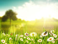 Bright summer afternoon natural backgrounds with beauty chamomile flowers Stock Photo