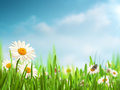 Bright summer afternoon natural backgrounds with beauty daisy flowers Stock Photos