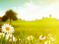 Bright summer afternoon natural backgrounds for your design Stock Photos