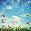 Bright summer background with butterflies and grass Royalty Free Stock Photo