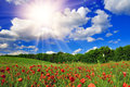 Bright sun over poppy field Royalty Free Stock Photo