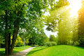 Bright sunny day in park. Sun rays illuminate green grass and tr Royalty Free Stock Photo