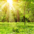 Bright sunny day in park Royalty Free Stock Photo