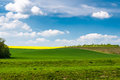Bright sunny spring day time with blue sky and green wheat fields Royalty Free Stock Photo