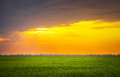 Bright sunset over wheat field. Royalty Free Stock Photo