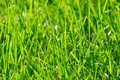 Bright vibrant green grass Royalty Free Stock Photography
