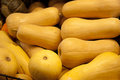 Bright yellow butternut squash fresh for sale in produce market Stock Photography