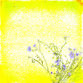 Bright yellow floral paper background with blue flowers for any of your project Royalty Free Stock Images