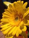 Bright yellow flower beautiful Stock Photos