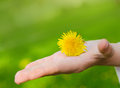 Bright yellow flower lie on a hand Stock Photos