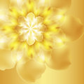 Bright yellow flower realistic close up Royalty Free Stock Photography