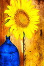 Bright yellow sunflower on a blue vase