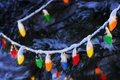 Brightly colored christmas lights hang from snow covered piine tree these on a pine branch just after dark Royalty Free Stock Photos