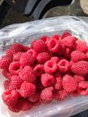 Brightness of summer in ripe juicy raspberry berries.