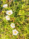Brightness white flowers soft and small Stock Photography
