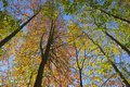 Autumn in forest canopy. Royalty Free Stock Photo