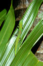 Brilliant Colored Gecko Stock Photos
