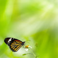 Brilliant swallowtail butterfly Stock Photo