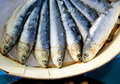 Brine salted sardines in round wood box Royalty Free Stock Photos