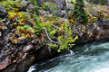 Brink of falls leaning pine tree reaches toward the water as the yellowstone river goes over the upper in yellowstone national Stock Photography
