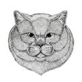 Brithish noble cat Male Hand drawn illustration for tattoo, emblem, badge, logo, patch Isolated on white background