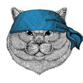 Brithish noble cat Male Wild animal wearing bandana or kerchief or bandanna Image for Pirate Seaman Sailor Biker