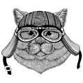 Brithish noble cat Male Wild animal wearing biker motorcycle aviator fly club helmet Illustration for tattoo, emblem