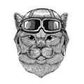 Brithish noble cat wearing leather helmet Aviator, biker, motorcycle Hand drawn illustration for tattoo, emblem, badge