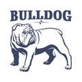 British bulldog mascot emblem illustration Royalty Free Stock Photo