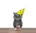 British Cat Celebrating Birthd...