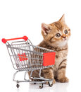 British cat with shopping cart isolated on white. Royalty Free Stock Photo