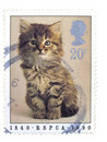 British cat stamp Royalty Free Stock Photography