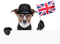 British dog with black bowler hat and black suit Stock Images