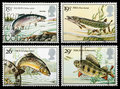British River Fish Postage Stamps Royalty Free Stock Images