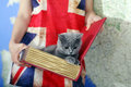 British shorthair baby girl holding a kitten in a book box map on the background and union jack t shirt Stock Images