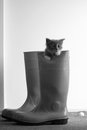 British shorthair baby kitten in a pair of boots Royalty Free Stock Image