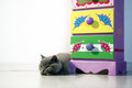 British shorthair baby near a coloured drawer Stock Image