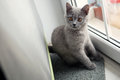 British shorthair baby portrait kitten sitting at the door Stock Photos
