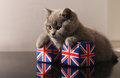British shorthair kitten sitting on a set of union jack dice Royalty Free Stock Photos