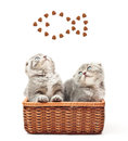 British shorthair kitten on white background in straw basket cat Stock Photo