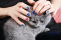 British shorthairkitten and union jack flag girl holding a shorthair kitten in her hands polished nails Royalty Free Stock Photography