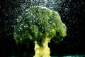 Broccoli on black background food fork fresh Royalty Free Stock Photo