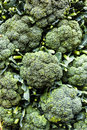 Broccoli close up of a bunch of Stock Photo