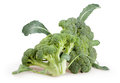 Broccoli group two leaves Royalty Free Stock Photo